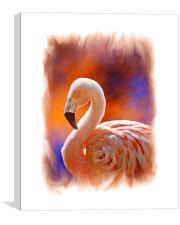 Chilean Flamingo , Canvas Print