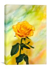 Yellow Rose #3, Canvas Print