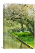 A quiet corner in Keukenhof Garden, Canvas Print