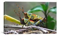 Grasshoppers , Canvas Print
