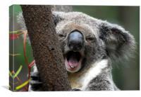 Koala yawn, Canvas Print