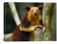 Tree Kangaroo, Canvas Print