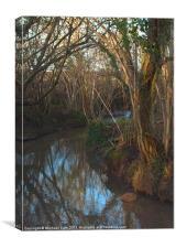 Stream through Trees, Canvas Print