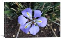 A Blue Iris, Canvas Print