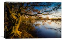 Golden Lakeside Tree, Canvas Print