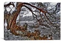 Gnarled Tree, Canvas Print