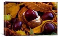 Horse Chestnuts, Canvas Print