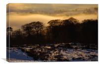 Mist Below Campsie Glen, Canvas Print
