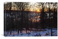 Sunset Through Trees, Canvas Print