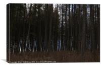 Shaded Trees, Canvas Print