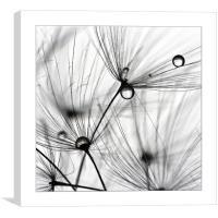 Art of drops, Canvas Print