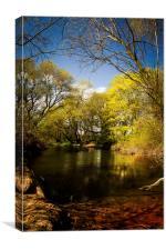Oakley Spring