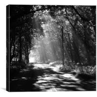 Sunlight through the trees, Canvas Print