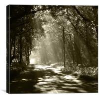 Sepia - Sunlight through the trees, Canvas Print