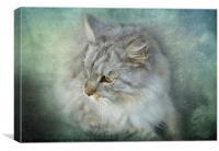 Grey Cat, Canvas Print