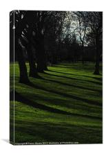 Trees and Shadows, Canvas Print