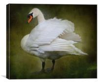 White Swan, Canvas Print