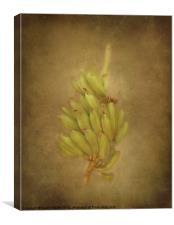 Bananas, Canvas Print