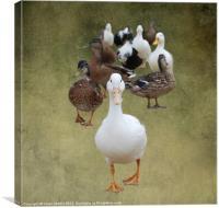 Ducks Approaching, Canvas Print
