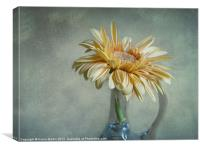 Yellow Gerbera, Canvas Print