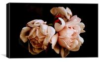 Pink Roses, Canvas Print