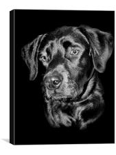 Good Dog, Canvas Print