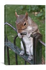 Squirrel Spectator, Canvas Print