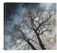 Skeleton Tree, Canvas Print