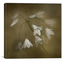 White Bell Flowers, Canvas Print