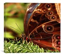 OWL BUTTERFLY WINGS, Canvas Print