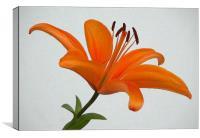 Orange Lily, Canvas Print