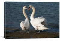 TWO FRIENDLY SWANS, Canvas Print