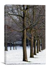 A LINE OF TREES, Canvas Print