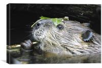 Beaver With Leaf Hat, Canvas Print
