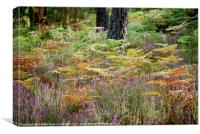 Heather in the heart of Aquitania Forest, Canvas Print