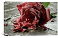 Broken Rose, Canvas Print