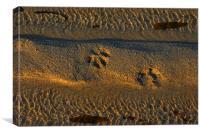 SEA SAND & PAW PRINT
