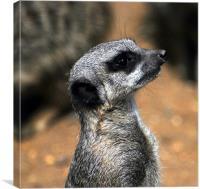 Meerkat.com
