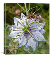 Wasp on Blue Flower, Canvas Print
