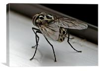 The Fly, Canvas Print