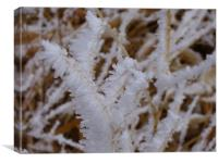 Ice on Weeds, Canvas Print