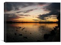 Sunset Swans, Canvas Print
