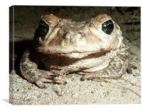 Cuban Frog, Canvas Print