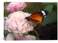 A Butterfly on a pink flower , Canvas Print