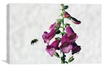 Bee and Foxglove , Canvas Print
