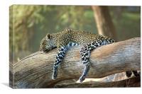 Lazing Leopard , Canvas Print