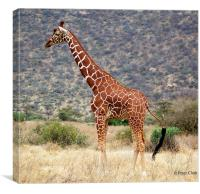 Giraffe of the Masi , Canvas Print