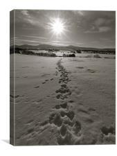 Animal tracks, Canvas Print