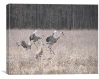Dance of the Cranes , Canvas Print