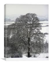 Tree in Snow , Canvas Print
